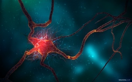 neuron_cell-wide